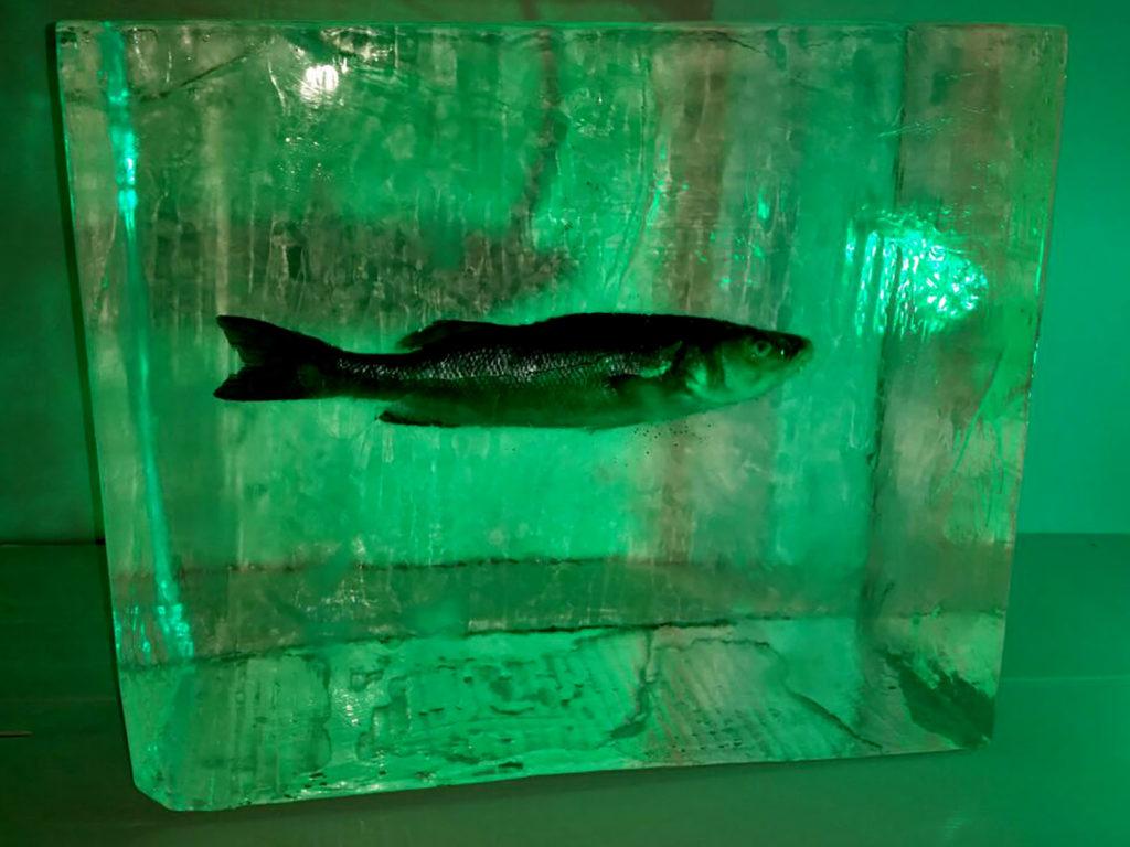 branzino ghiacciato - Ghiaccio d'Arte